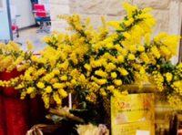 ミモザの花がやって来ました✿       大泉本店