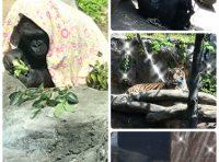 上野動物園😛